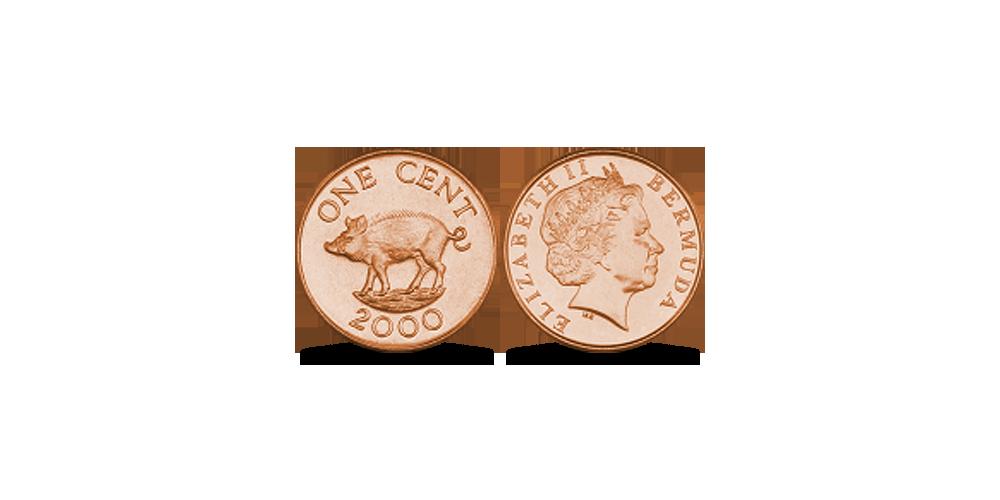 Bermudų centas su kiaule